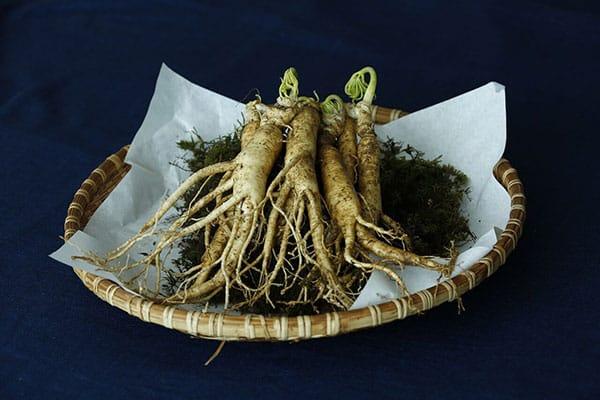 Ginseng: An Effective Treatment for Cancer?